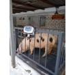 Весы для взвешивания животных VTP-G-1015 ( 1000 кг, 1000х1500 мм ) с клеткой